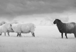 """ovejas negras almas reparadoras familia 320x220 - """"Ovejas Negras"""", almas reparadoras de la familia"""