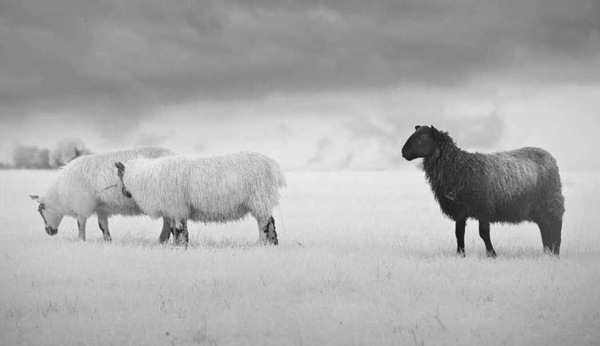 """ovejas negras almas reparadoras familia 850x491 - """"Ovejas Negras"""", almas reparadoras de la familia"""