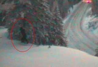 departamento de transporte bigfoot 320x220 - El Departamento de Transporte de EE.UU. publica imágenes de un Bigfoot real