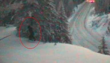 departamento de transporte bigfoot 384x220 - El Departamento de Transporte de EE.UU. publica imágenes de un Bigfoot real