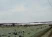 nieve verde cheliabinsk 104x74 - Cae nieve verde en la ciudad rusa de Cheliábinsk y nadie sabe cuál es su origen