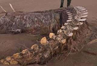 esqueleto de una misteriosa bestia playa escocesa 320x220 - Aparece el esqueleto de una misteriosa bestia después de una tormenta en una playa escocesa