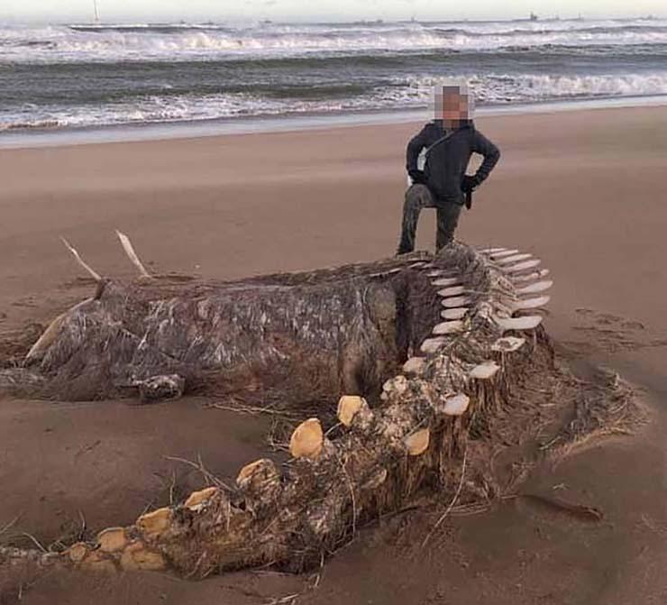 esqueleto misteriosa bestia playa escocesa - Aparece el esqueleto de una misteriosa bestia después de una tormenta en una playa escocesa