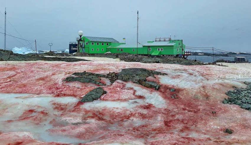 nieve antartica rojo sangre 850x491 - La nieve antártica se vuelve 'rojo sangre', ¿otra señal apocalíptica?