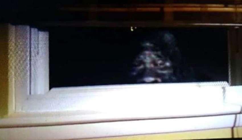bigfoot ventana casa 850x491 - Un matrimonio fotografía un Bigfoot mirando por la ventana de su casa en Colorado