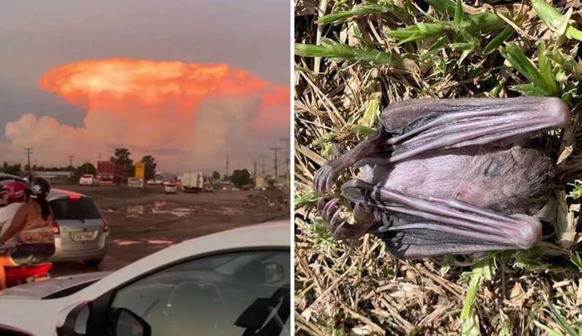 hongo rojo portugal 850x491 - Hongo rojo sobre Portugal y muerte masiva de murciélagos en Israel, ¿señales apocalípticas?
