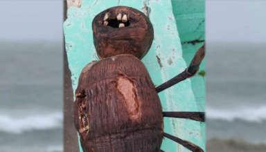 muneca de vudu dientes 384x220 - Un hombre encuentra una inquietante muñeca de vudú con dientes humanos en una playa de Florida