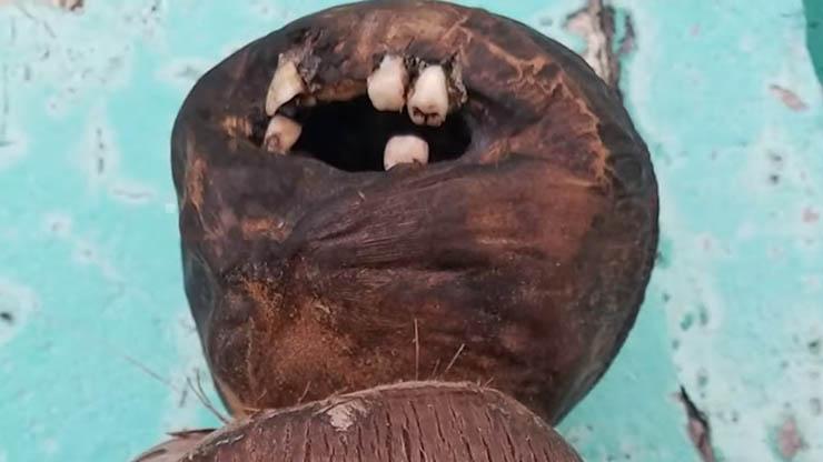 Poupée Vudu dents humaines - Un homme trouve une poupée vaudou dérangeante avec des dents humaines sur une plage de Floride