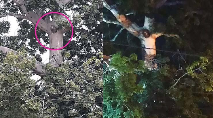 jesus aparece arbol - La imagen de Jesús aparece en un árbol durante la cuarentena de una ciudad en Colombia