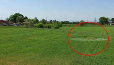 circulo cultivos italia 384x220 - Aparece un círculo en los cultivos en Italia, epicentro del coronavirus en Europa