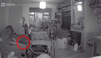 aparicion fantasmal gato 384x220 - Una mujer graba la aparición fantasmal de su gato un año después de su muerte