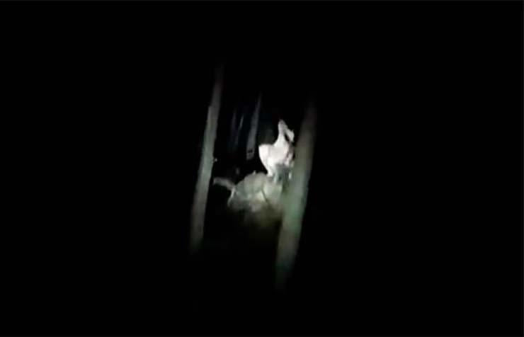 aterradora criatura polonia - Un hombre graba el encuentro con una misteriosa y aterradora criatura en un bosque de Polonia
