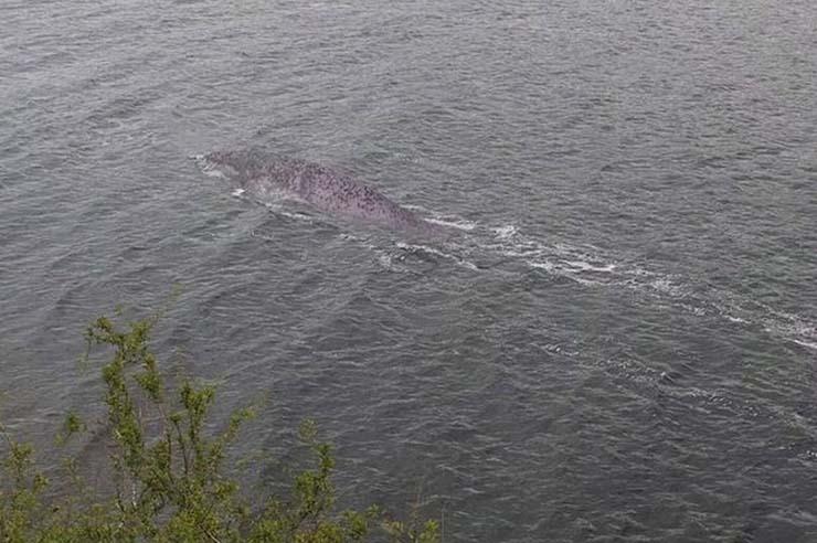 mejor evidencia del monstruo lago ness - Un turista consigue la mejor evidencia del monstruo del lago Ness de la historia