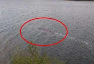 mejor evidencia monstruo lago ness 320x220 - Un turista consigue la mejor evidencia del monstruo del lago Ness de la historia