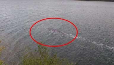 mejor evidencia monstruo lago ness 384x220 - Un turista consigue la mejor evidencia del monstruo del lago Ness de la historia