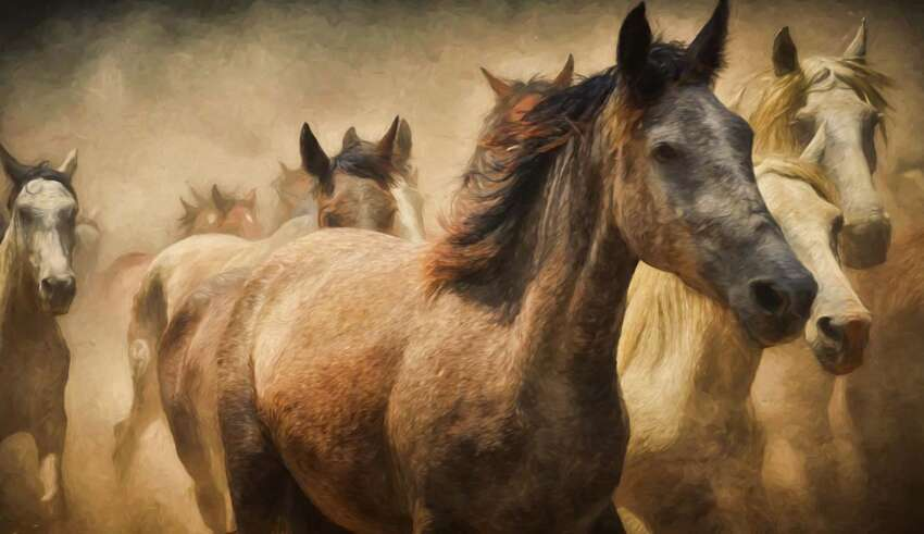 animales sexto sentido predecir terremotos 850x491 - Científicos confirman que los animales tienen un sexto sentido y pueden predecir terremotos