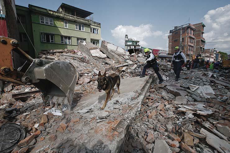 animales tienen un sexto sentido predecir terremotos - Científicos confirman que los animales tienen un sexto sentido y pueden predecir terremotos