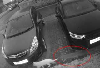gato fantasmal amigo felino 320x220 - Cámara de seguridad muestra un gato fantasmal que acababa de fallecer siguiendo a su amigo felino