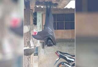 murcielago humano filipinas 320x220 - Fotografían un murciélago humano en Filipinas, y no es un zorro volador gigante