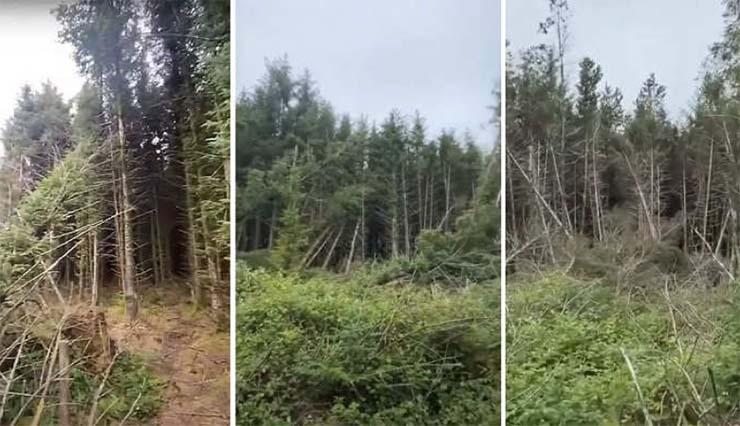 ovni estrellado bosque reino unido - Un hombre descubre el sitio de un OVNI estrellado en un bosque del Reino Unido