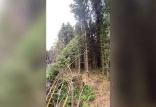 ovni estrellado en bosque 320x220 - Un hombre descubre el sitio de un OVNI estrellado en un bosque del Reino Unido