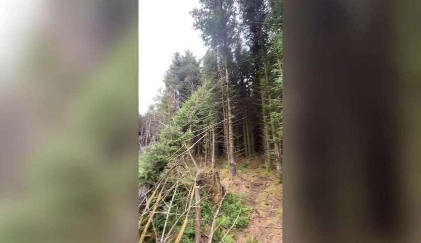 ovni estrellado en bosque 850x491 - Un hombre descubre el sitio de un OVNI estrellado en un bosque del Reino Unido