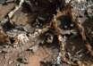 ruinas edificio marte 104x74 - Descubren antiguas ruinas de un edificio en Marte