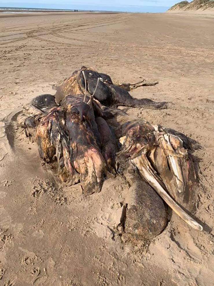 misteriosa criatura en una playa reino unido - Aparece una misteriosa criatura en una playa del Reino Unido y nadie sabe qué es