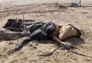 misteriosa criatura playa reino unido 320x220 - Aparece una misteriosa criatura en una playa del Reino Unido y nadie sabe qué es