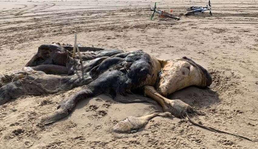 misteriosa criatura playa reino unido 850x491 - Aparece una misteriosa criatura en una playa del Reino Unido y nadie sabe qué es