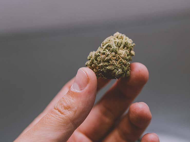 psiquicos buscar marihuana perdida - Una empresa de EE.UU. utiliza psíquicos para ayudar a sus clientes a buscar marihuana perdida