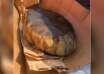 huevo reptil extraterrestre 104x74 - Descubren un huevo de reptil extraterrestre en Kentucky