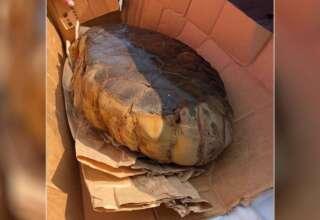 huevo reptil extraterrestre 320x220 - Descubren un huevo de reptil extraterrestre en Kentucky