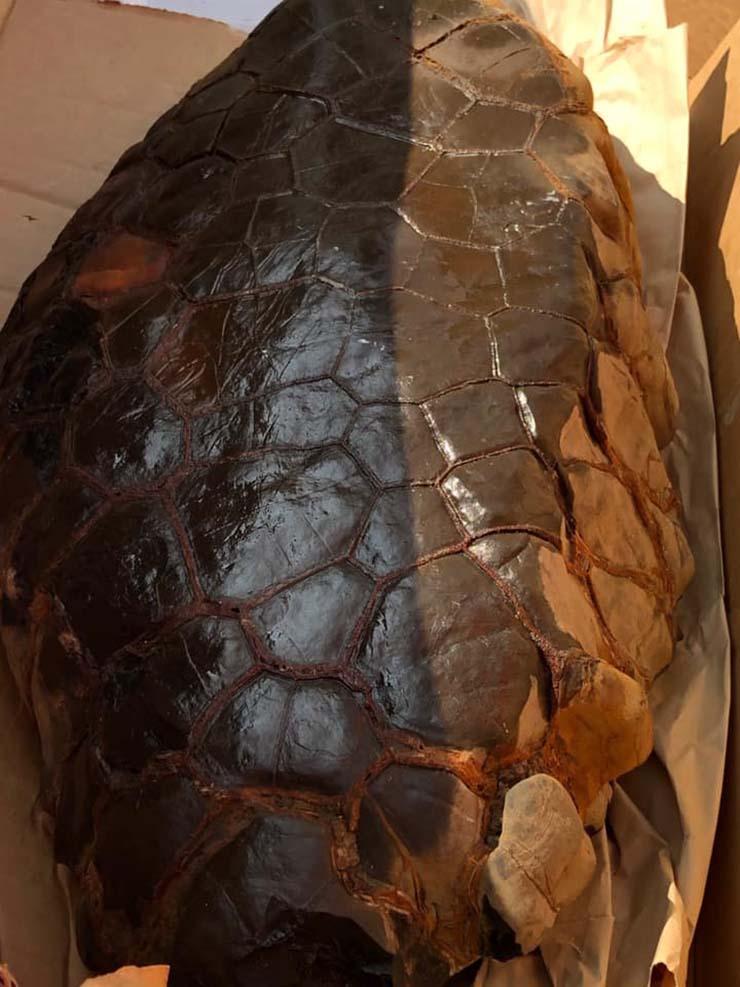 reptil extraterrestre en kentucky - Descubren un huevo de reptil extraterrestre en Kentucky
