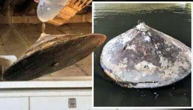 restos ovni rio 384x220 - Encuentran los restos de un OVNI en un río de Estados Unidos