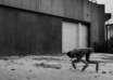 robot boston dynamics canada 104x74 - 'Black Mirror' en la vida real: un perro robot de Boston Dynamics patrulla las calles de Canadá