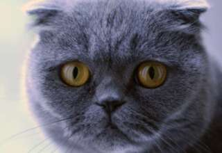 gato cumple deseos 320x220 - Venden un gato por más de 100.000 euros que hace milagros y cumple deseos