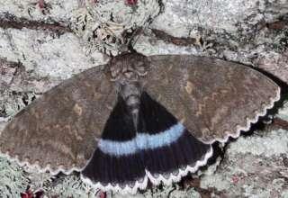 mariposa mutante chernobil 320x220 - Encuentran una mariposa mutante en la zona de exclusión de Chernóbil