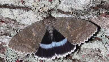 mariposa mutante chernobil 384x220 - Encuentran una mariposa mutante en la zona de exclusión de Chernóbil