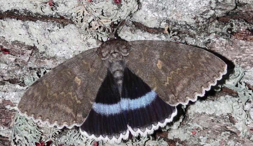 mariposa mutante chernobil 850x491 - Encuentran una mariposa mutante en la zona de exclusión de Chernóbil
