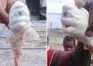 tiburon mutante 104x74 - Capturan en Indonesia un tiburón mutante con un solo ojo