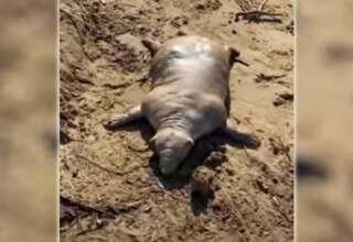aberrante criatura playa griega 320x220 - Aparece una aberrante criatura muerta en una playa griega tras una tormenta
