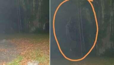 criatura legendaria hombre mono 384x220 - Fotografían a la criatura legendaria 'Hombre mono' en Singapur
