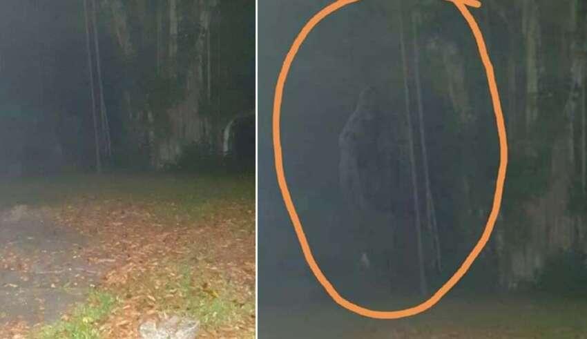 criatura legendaria hombre mono 850x491 - Fotografían a la criatura legendaria 'Hombre mono' en Singapur