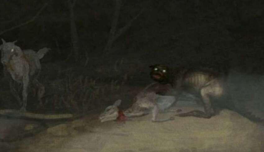 chile ataque misteriosa criatura 850x491 - Alarma en Chile por el ataque de una misteriosa criatura que ha drenado la sangre de más de 50 animales
