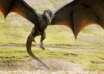dragones existieron humanos 104x74 - Reconocido profesor de universidad asegura que los dragones existieron y cohabitaron con los humanos