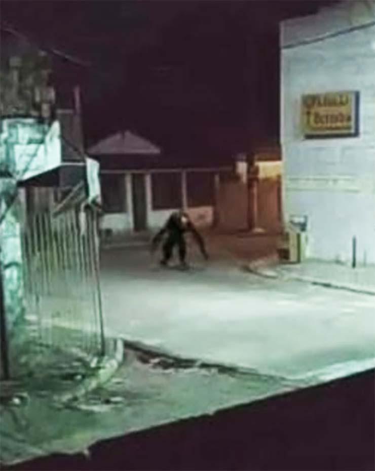 aterradoras criaturas noche - Pánico en Brasil por unas imágenes reales que muestran aterradoras criaturas deambulando por las calles durante la noche