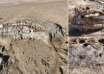 bestia marina gales 104x74 - Una misteriosa bestia marina de cuatro toneladas aparece en una playa en Gales, y no es una ballena