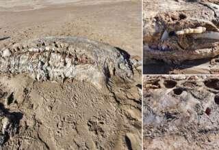 bestia marina gales 320x220 - Una misteriosa bestia marina de cuatro toneladas aparece en una playa en Gales, y no es una ballena