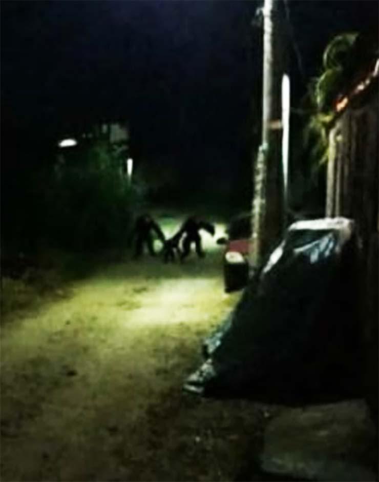 brasil aterradoras criaturas noche - Pánico en Brasil por unas imágenes reales que muestran aterradoras criaturas deambulando por las calles durante la noche